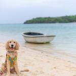 愛犬と沖縄旅行!わんちゃんと楽しむ海のアクティビティ【石垣編】