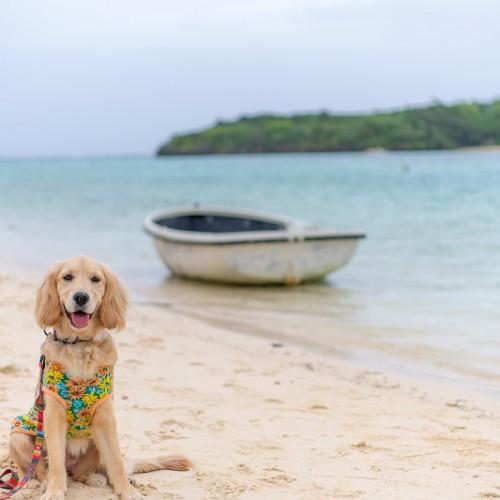 沖縄の海と犬