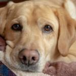 愛犬のお肌や肉球、乾燥していませんか?愛犬用のおすすめ保湿剤5選☆