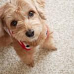 犬の第一印象は何で決まる?犬が人を判断する時のポイントや、初対面でも犬に好かれる人の特徴とは!
