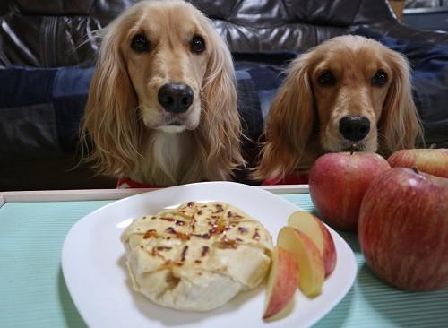 愛犬とアップルパイ