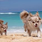 愛犬と沖縄旅行!わんちゃんと楽しむ海のアクティビティ【本島編】