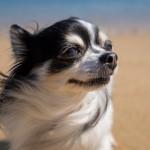 愛犬との旅行は貸別荘がおすすめ!千葉の貸別荘「PFリゾート・ポルト」が最高だった!