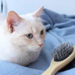 猫ブラシにもこだわりを!機能別、おすすめ猫ブラシ7選☆