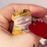 ペットにおすすめの爬虫類ベスト10【初心者向け】