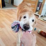 外出自粛で室内で過ごす時間が長い愛犬におすすめ!長く楽しめる「おもちゃ」と「おやつ」