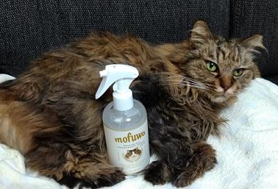 猫とmofuwa