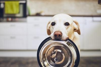 餌をねだる犬