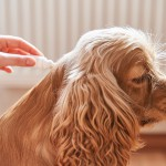 ノミ・マダニから愛犬を守りたい!タイプ別予防薬を5つ紹介☆