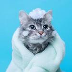 シャンプー嫌いな猫におすすめ!洗い流さないタイプのシャンプーの種類とメリット★