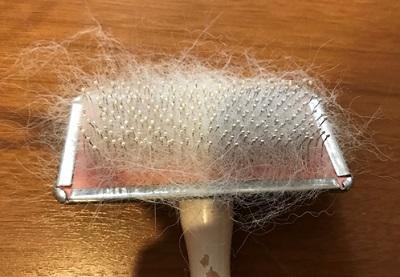 毛まみれのスリッカーブラシ