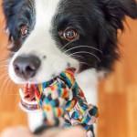噛む力が強すぎる!すぐにおもちゃを壊してしまう愛犬にオススメの丈夫なおもちゃ7選☆