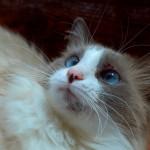 愛猫の口元にできた黒いブツブツは「猫ニキビ」かも!?猫ニキビの原因と対処法!