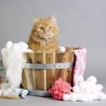 初めての猫のシャンプー、いつからしていい?頻度やタイミングは?