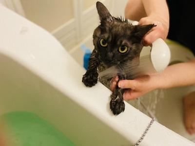 シャワーをする猫