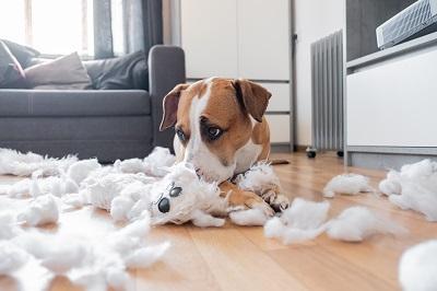 ぬいぐるみを破壊した犬