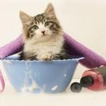 猫のシャンプータイムを快適に!猫のシャンプーのやり方と注意点