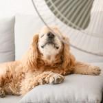愛犬の暑さ対策。用意しておくと便利なアイテム。