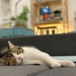 猫の夏バテ予防に効果的な5つの方法☆症状が出た時はどうすれば良い?