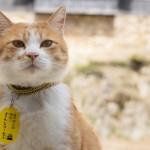 岡山県・備中松山城の猫城主「さんじゅーろー」の可愛いグッズに注目!グッズのプレゼントも☆