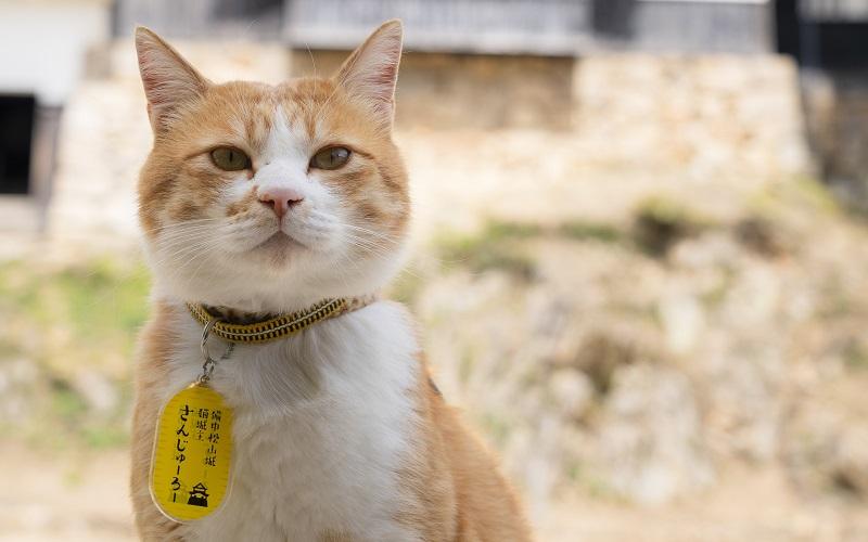 備中松山城 猫城主 さんじゅーろー