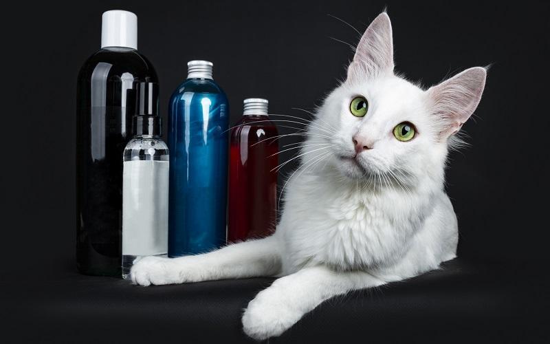 猫とシャンプーボトル