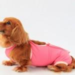 愛犬の避妊手術はいつ受けるべき?費用や発情期の知識も総まとめ!