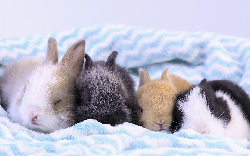眠る子ウサギたち