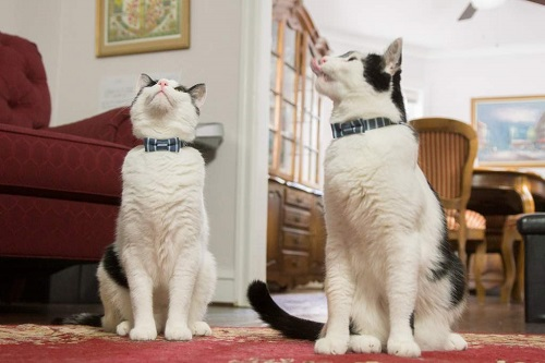 首輪する猫