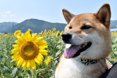 574_02_dog