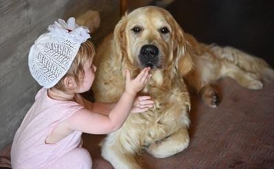 大型犬と子供