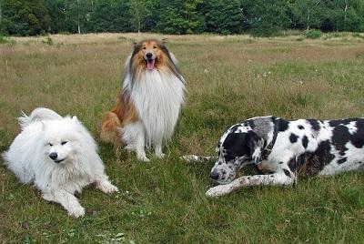 大型犬集合