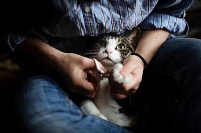 囚われの猫