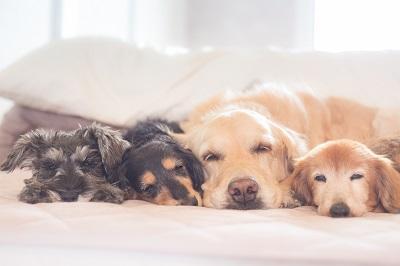 寝ている犬達