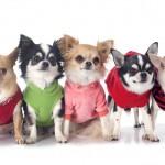 愛犬に着せたいオススメの夏服~夏用犬服のメリット~