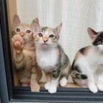 愛猫が網戸を破る…!脱走防止にも繋がる、猫から網戸を守る4つの方法☆