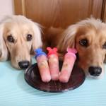 犬用アイスキャンディーの作り方☆ダイソーの神アイテムで簡単手作りおやつ!