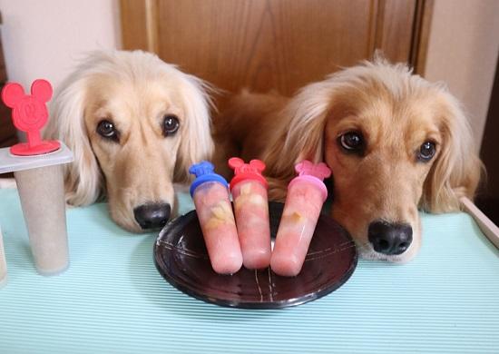 犬とアイスキャンデー