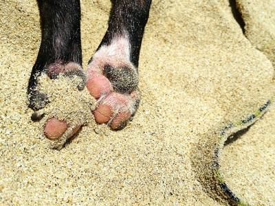 犬の足と砂