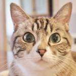 猫ちゃん大好き!食いつき抜群のピュレ状おやつ5選☆