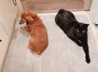 愛犬と愛猫