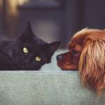 愛犬愛猫の「プチ断食」の方法と注意点☆