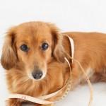 愛犬に犬靴を選ぶ際に重要!愛犬の足のサイズの測り方
