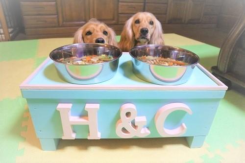 愛犬とペットテーブル