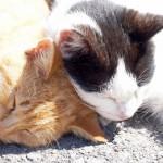 新入り猫を迎える時にチェックしておきたい先住猫との相性、仲良くなるためのステップや注意点