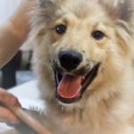 愛犬にハンドメイド☆ブラッシングスプレーの作り方