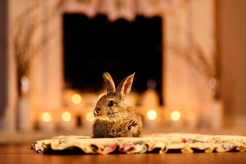 暖炉とウサギ
