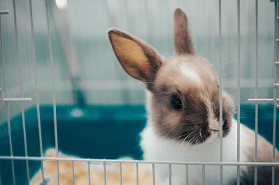 ケージの中のウサギ