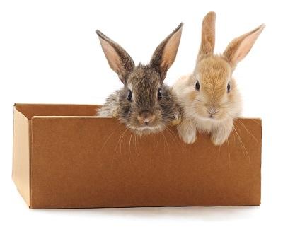 箱に入るウサギ