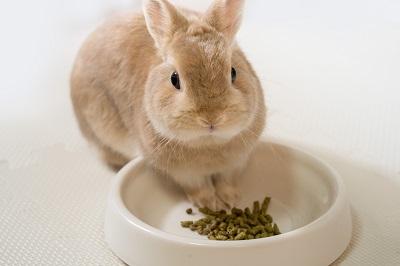 餌を食べるウサギ